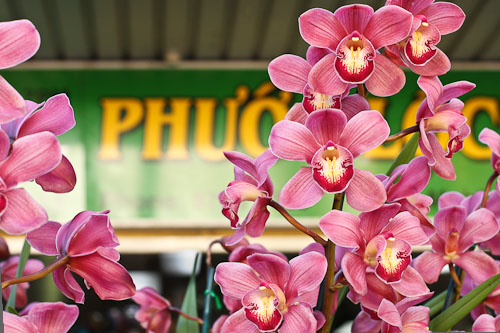 Exotic orchids in little Saigon Sydney