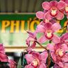 Exotic orchids in little Saigon Sydney