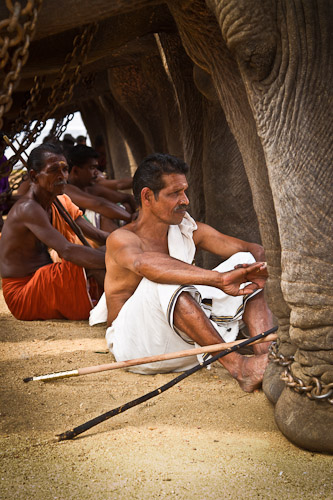 Elephant mahouts India