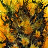 orange thorn