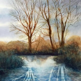 wetland shadows