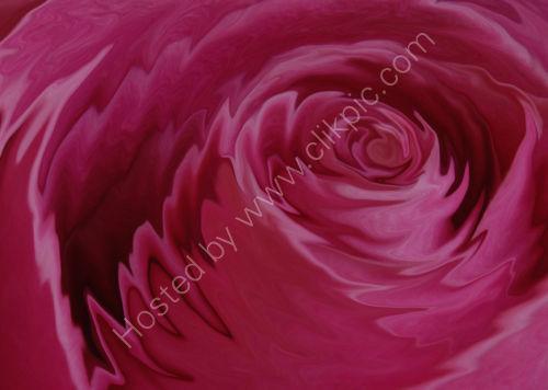 Liquid Rose - a variation on a theme.