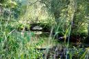 Small bridge at Bentley Wildfowl Trust