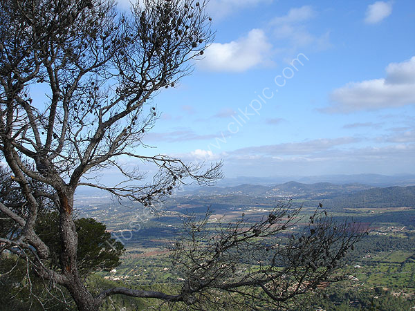 The Central Plain of Mallorca