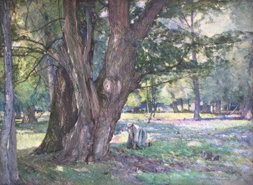 GIFFARD HOCART LENFESTY (1872 - 1943)
