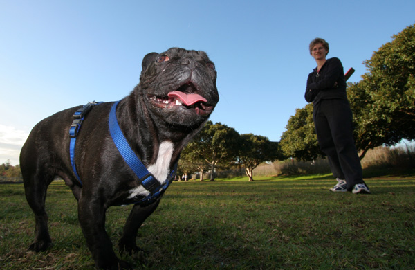 French Bull Dog with Owner