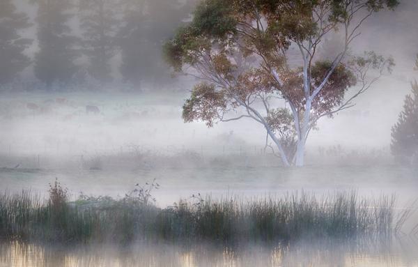 Tallong Mist