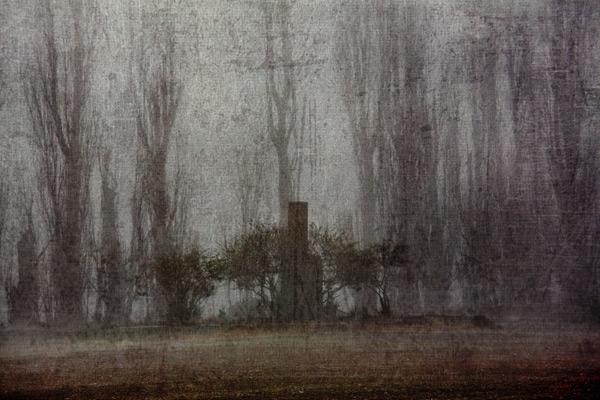 Early Mist