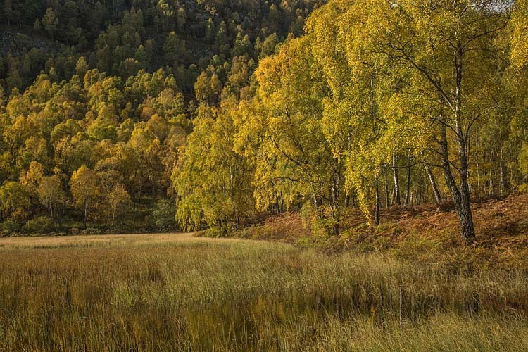 Autumn colours near Aviemore