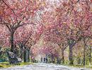 Royal Blush (Greenwich Park) SOLD