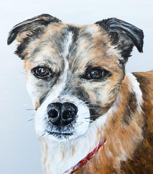 'Buddy' Close-Up