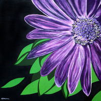 'Purple Star' SOLD