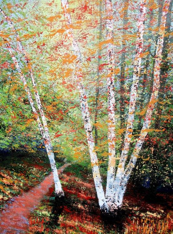 Mellow Tones, Sunlit Birches.