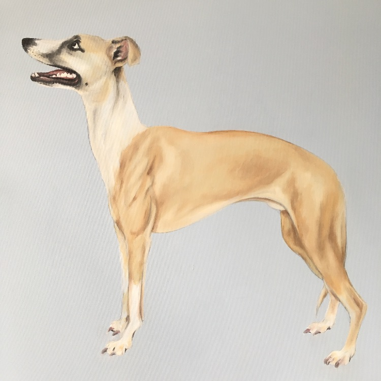 Whippet SOLD