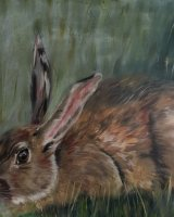 Giant hare