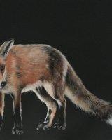 Fox in the moonlight SOLD