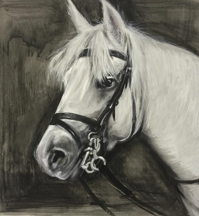 Gemma's horse