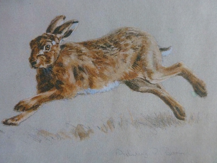 Running hare SOLD