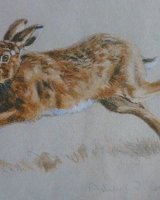 Running hare SOLD