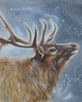 Winter stag SOLD