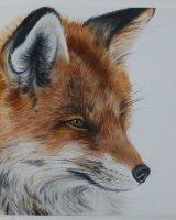Mr Fox SOLD