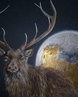 Moonlit stag SOLD