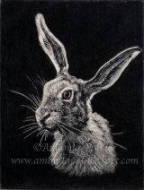 'Hare's Head'