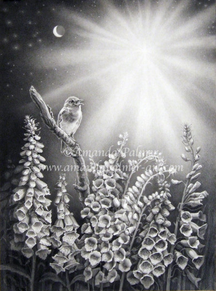 'The Robin, The Foxglove and The Star'