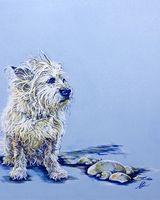 Wet Cairn Terrier Commission