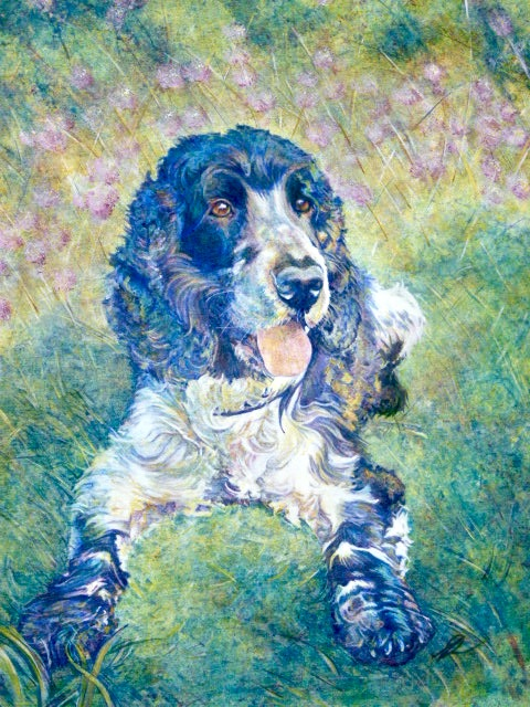Cocker Spaniel Commission