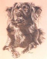 1st Pet Portrait Commission Ever