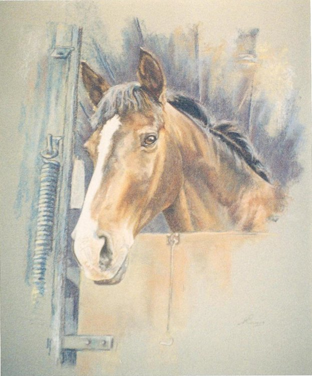 Pet Portrait Commission - Horse in Lorry