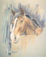 Pet Portrait Commission - Horse in Lorry