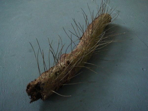 Logbrush
