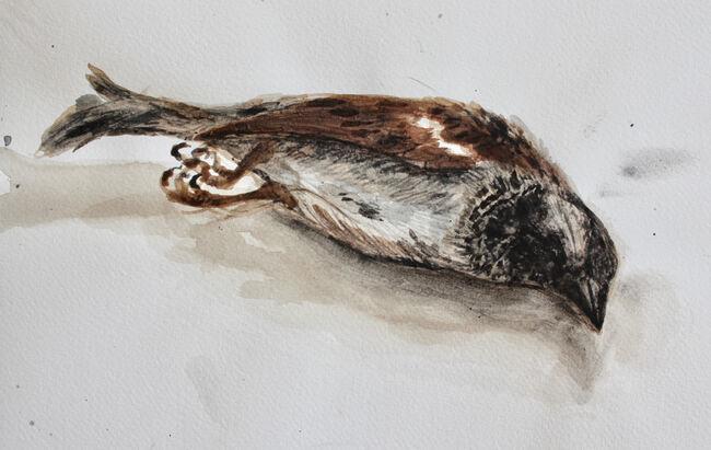 Fallen Sparrow
