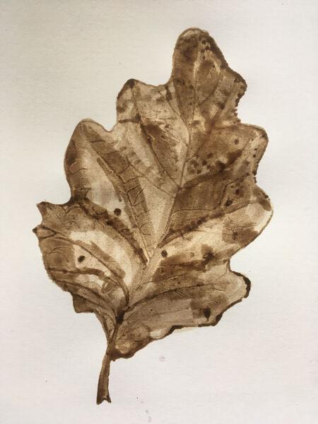 Oak leaf front