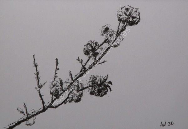 Blossom ©