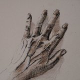 Drawing of hand showing sinews and veins ©