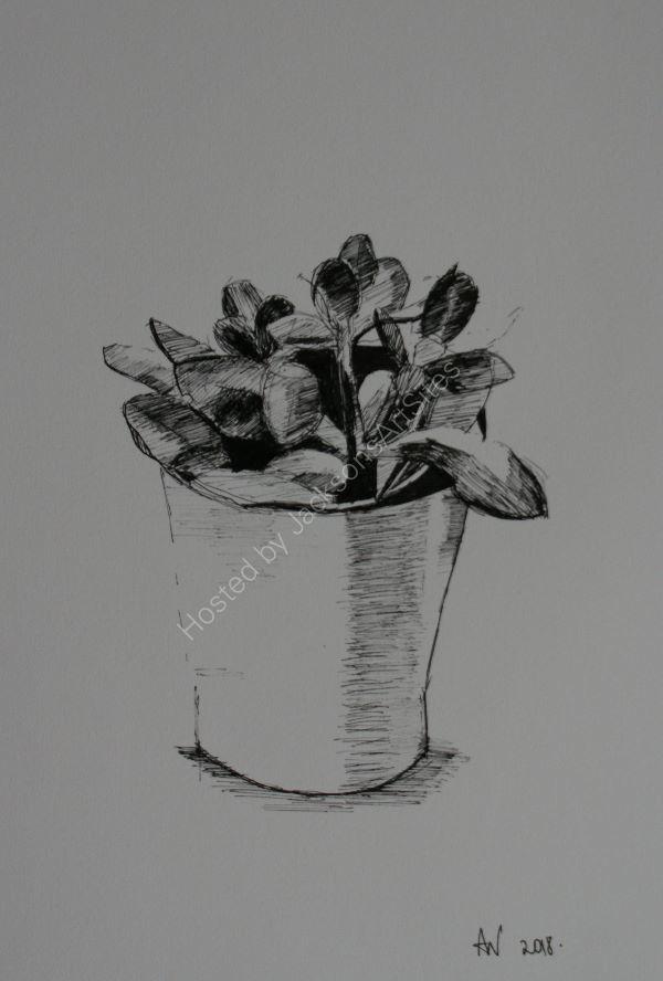 Money Plant ©