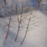 Saplings in the Snow ©