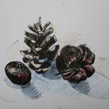 Small Pine Cone, Scotch Bonnet and Grape ©