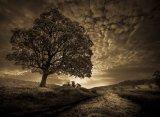 Pastures : David Burn