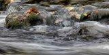 1st  Autumn  Waters : Dave Jones