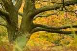 2nd Autumn Bokeh - Richard Booth