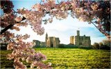 3rd Blossom Time at Warkworth Castle : Harry Wilkinson