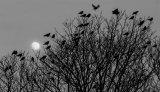 3rd Moon rising - Richard Poyer