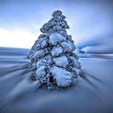 3rd Snow : David Jones