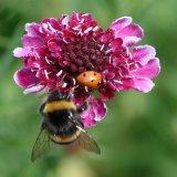 4th Joan Robinson - Ladybird and Bee