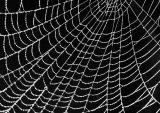 Com Spider's Web : Joan Robinson