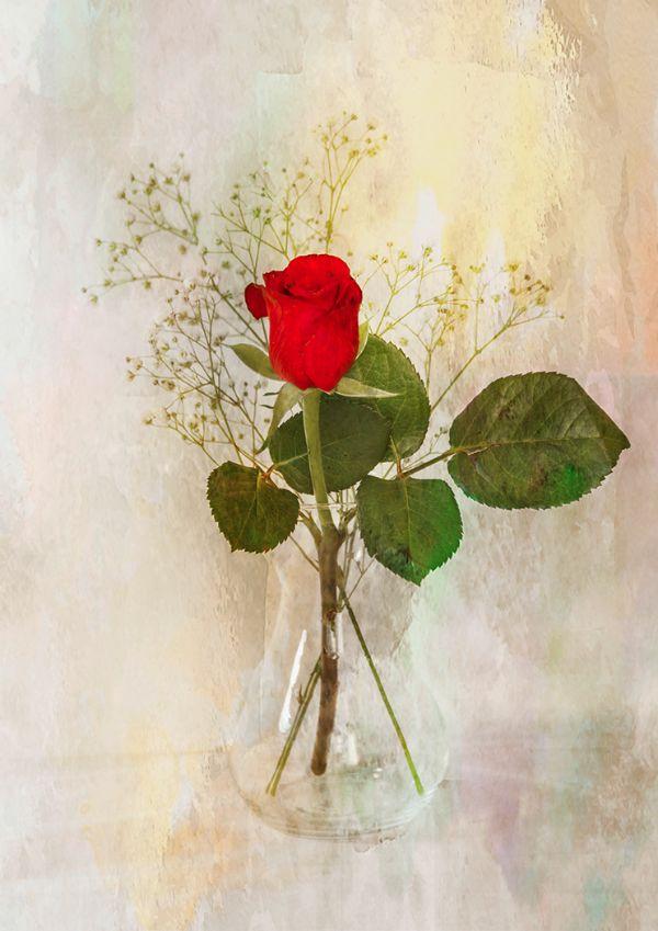 HC Red Rose : John Twizell